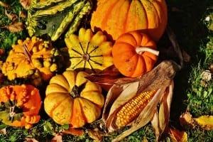 pumpkins-1708781_640
